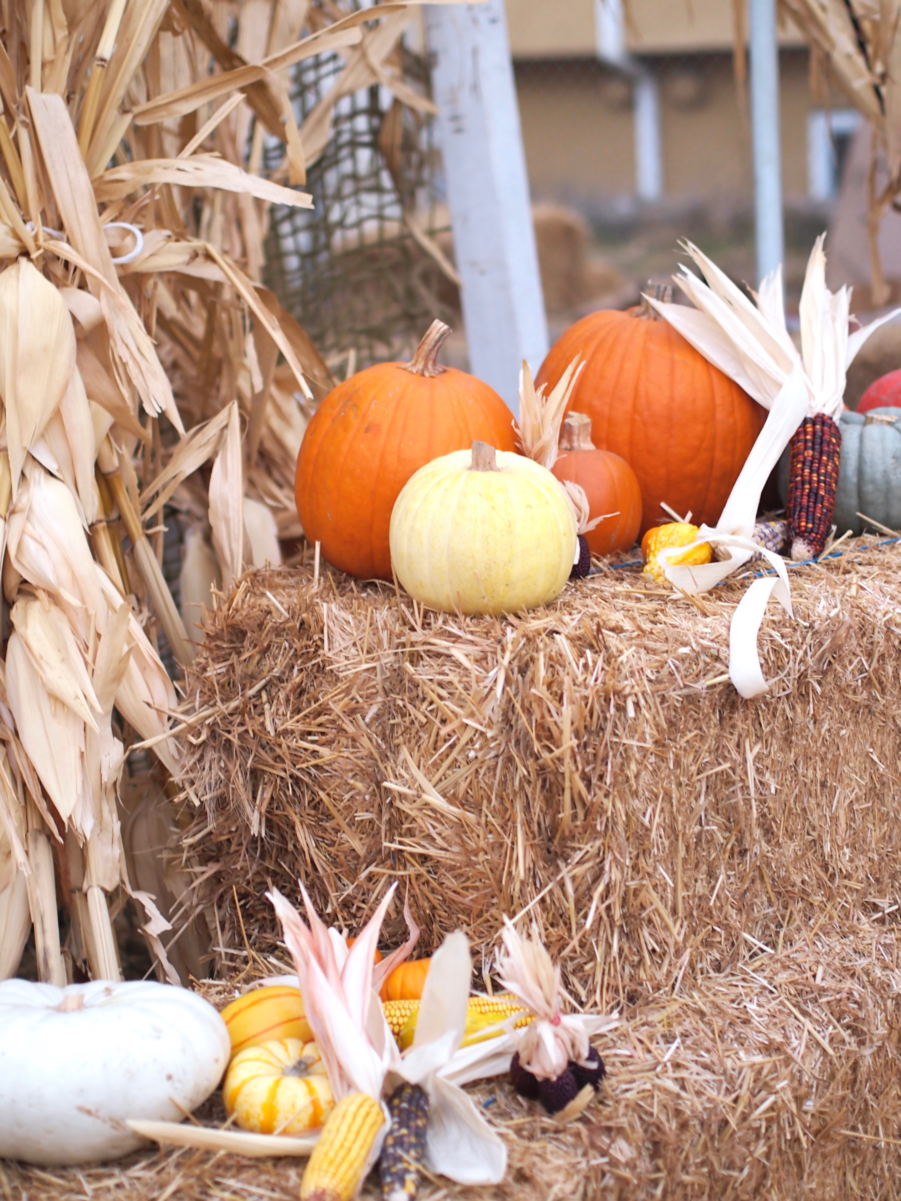 Hay, Pumpkin, Games, cashmere, burberry, boots, Tory Burch, fun, fall, marshalls